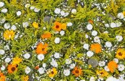 Verschillende bloemen in verschillende kleuren, natuurlijke achtergrond Stock Foto