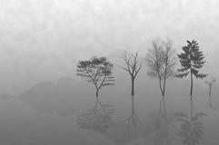 Verschillende bomen en een mooie mist royalty-vrije stock fotografie