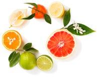 Verschillende citrusvruchten, hoogste mening royalty-vrije stock afbeeldingen