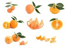 Verschillende cultivars van mandarijnen Stock Foto's