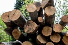 Verschillende die boomboomstammen bovenop elkaar worden gesneden Stock Foto