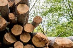 Verschillende die boomboomstammen bovenop elkaar worden gesneden Royalty-vrije Stock Foto