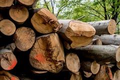 Verschillende die boomboomstammen bovenop elkaar worden gesneden Royalty-vrije Stock Afbeeldingen