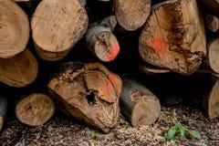 Verschillende die boomboomstammen bovenop elkaar worden gesneden Stock Afbeeldingen