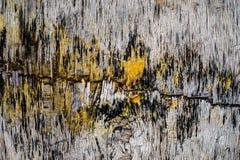 Verschillende die texturen op hout door fungy, vorm wordt geproduceerd royalty-vrije stock foto