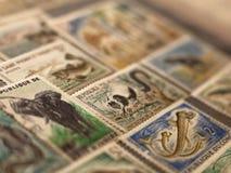 Verschillende dierlijke zegels in het album royalty-vrije stock afbeelding