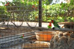 Verschillende exotische vogels in openluchtvogelhuis, mening door rooster stock foto's