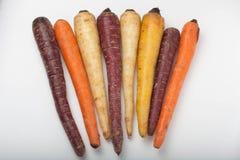 Verschillende gekleurde verse geplukte geassorteerde wortelen Royalty-vrije Stock Fotografie
