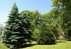 Verschillende groene tonalties in het park Stock Afbeelding