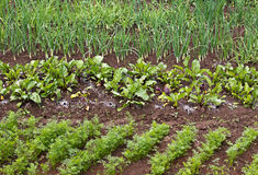 Verschillende groente Royalty-vrije Stock Foto