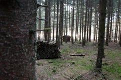 Verschillende houten stapels in bos stock foto's