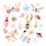 Verschillende insecten Stock Foto's