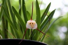 Verschillende kleine orchidee Stock Foto
