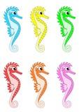 Verschillende kleur Seahorses Stock Afbeeldingen