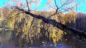 Verschillende landschappen van de herfst stock videobeelden