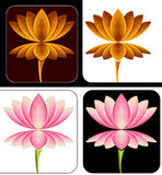 Verschillende lotusbloem Stock Afbeelding