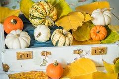 Verschillende minipompoenen en de herfstbladeren in een oude uitstekende koffer Het stilleven van de herfst stock afbeeldingen