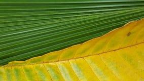 Verschillende patroon twee en kleur van de bladeren Royalty-vrije Stock Foto's