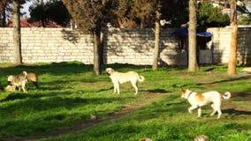 verschillende rassen die van honden in de kennelwerf spelen stock video