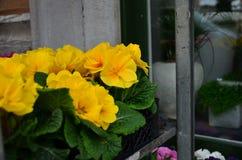 Verschillende reeks multicolored bloemen op de straat voor achtergrond stock foto