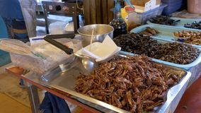 Verschillende soorten Gekookte insecten op een plaat bij voedselmarkt Azië, Thailand, Pattaya stock videobeelden
