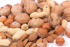 Verschillende soorten noten Royalty-vrije Stock Afbeelding