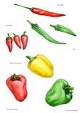 Verschillende soorten peper, groente, voeding, voedsel, gekleurde saus, Stock Foto