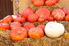 Verschillende soorten pompoenen op landbouwbedrijfflard Stock Foto's