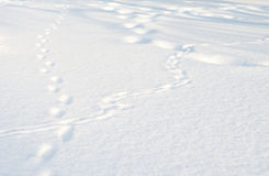 Verschillende Sporen op het sneeuwgebied Stock Fotografie