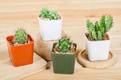 Verschillende succulents en cactus in potten stock afbeeldingen
