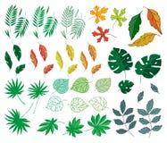 Verschillende tropische van het de wildernispalmblad van de bladerenzomer groene exotische van de de aardinstallatie de flora vec Royalty-vrije Stock Foto
