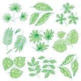 Verschillende tropische van het de wildernispalmblad van de bladerenzomer groene exotische van de de aardinstallatie de flora vec Royalty-vrije Stock Afbeelding