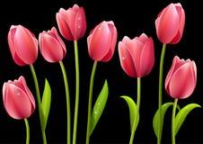 Verschillende tulpen die op zwarte achtergrond worden geïsoleerdg Royalty-vrije Stock Foto's