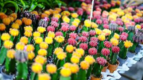 Verschillende types en kleur van cactus bij een landbouwbedrijf royalty-vrije stock afbeeldingen