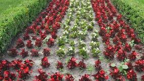 Verschillende types en kleuren van bloemen op bloemenmuur, mooie tuin, close-up stock video