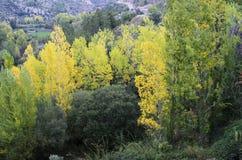Verschillende types van bomen in de herfst Stock Foto's