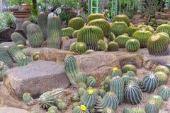 Verschillende types van cactussen royalty-vrije stock foto