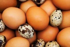 Verschillende Types van Eieren Stock Fotografie