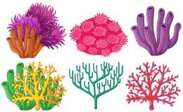 Verschillende types van koraalrif Stock Afbeeldingen