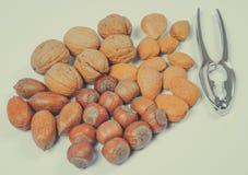 Verschillende types van noten in shell op een witte achtergrond Stock Afbeelding