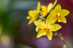 Verschillende types van orchideeën Stock Fotografie