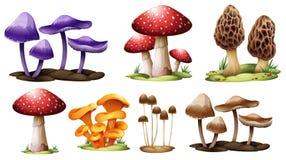 Verschillende types van paddestoelen Stock Afbeeldingen