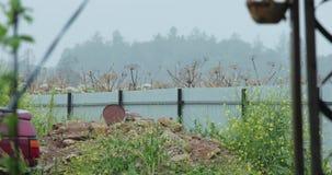 Verschillende vegetatie in het land video4k stock footage