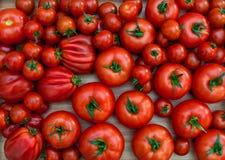 Verschillende verscheidenheden van tomaten Royalty-vrije Stock Foto's