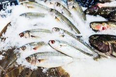 Verschillende vissen bij de supermarkt stock fotografie