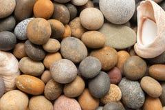Verschillende vorm van stenenachtergrond met overzeese shells royalty-vrije stock foto's