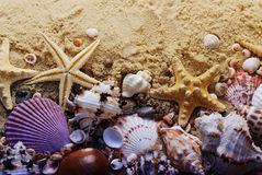 Verschillende zeeschelpen op het zand Het strandachtergrond van de zomer Het concept van de vakantieaffiche Royalty-vrije Stock Afbeeldingen