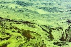 Verschmutzte Wasser durch giftige Chemikalien mit grünem und gelbem Abschaum Stockbilder