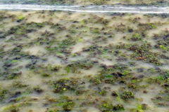 Verschmutztes Wasser Lizenzfreie Stockbilder