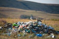 Verschmutzung der Natur Lizenzfreie Stockbilder